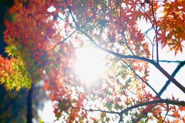 8. Autumn in Tokyo.jpg